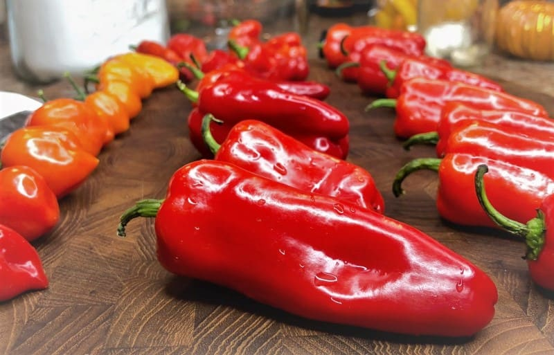 Larger Pepper Yield