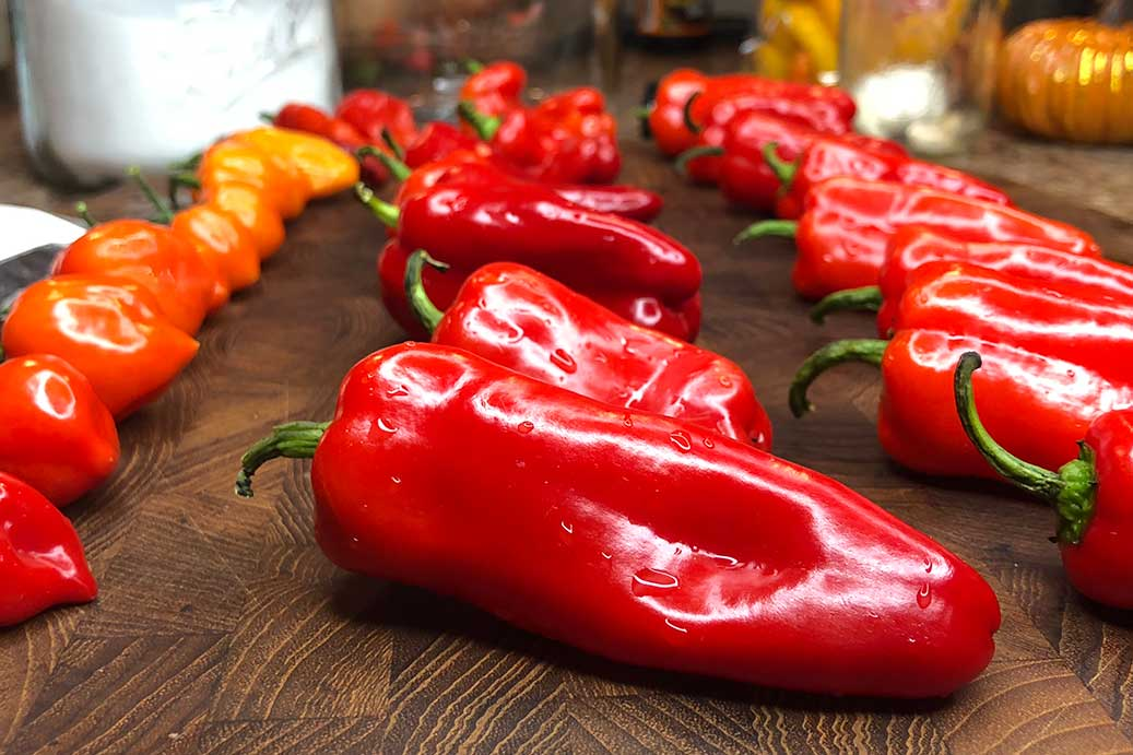 How To Increase Pepper Yield