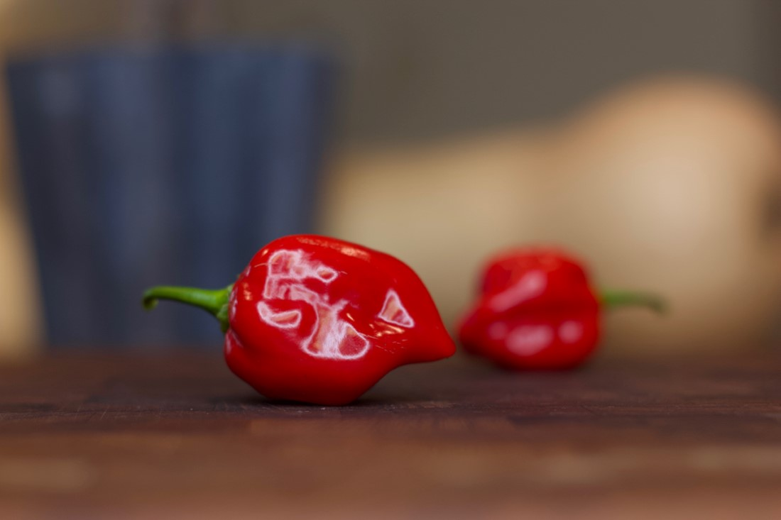 Red Savina Habanero Pepper