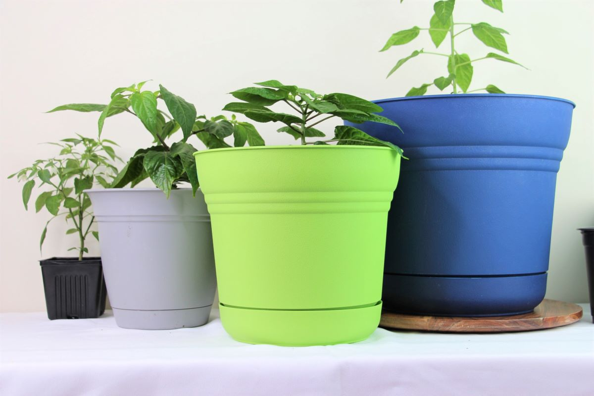 Container Size For Pepper Plants