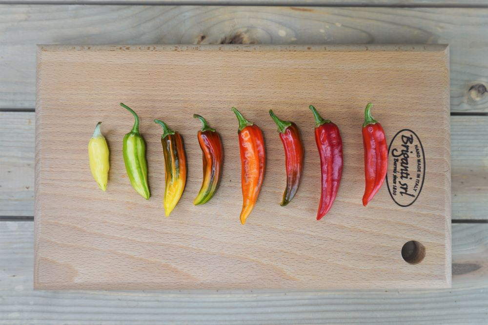 Fish Peppers Colors