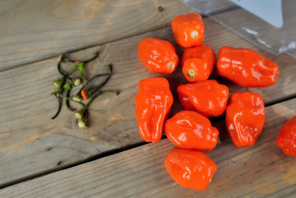 Freezing habanero peppers - removing stems