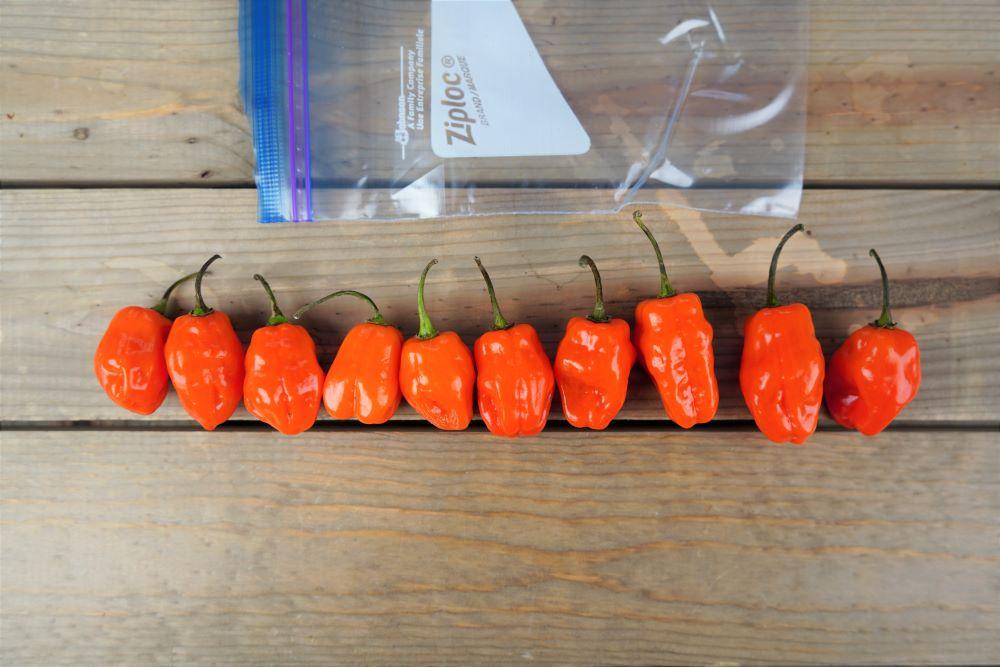 Freezing habanero peppers