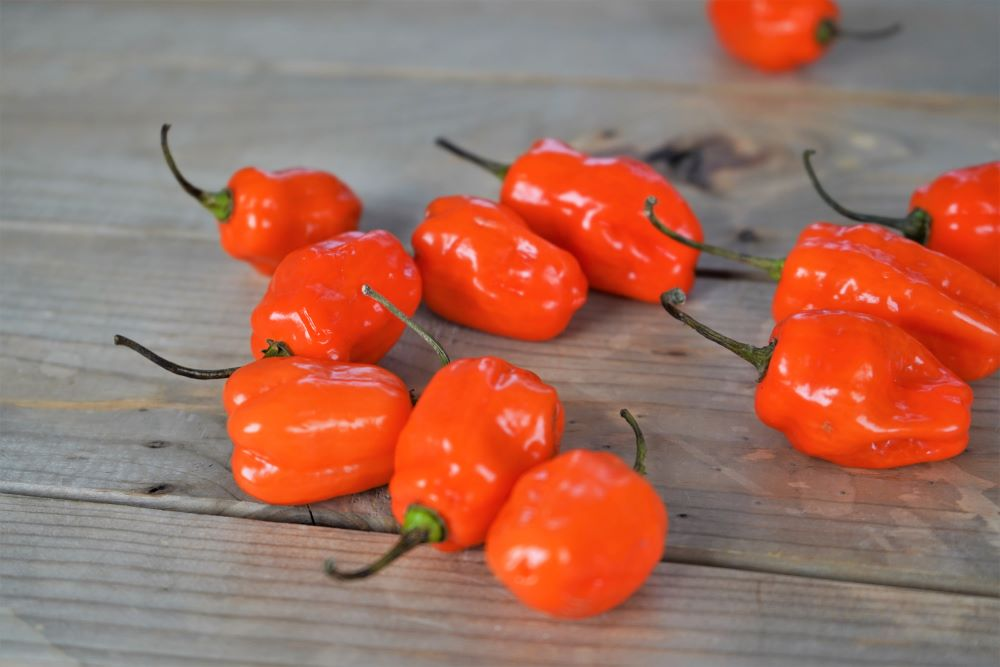Orange habanero peppers on wood
