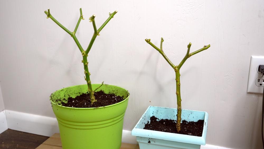 Overwintering 2 plants